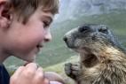 男孩与土拨鼠