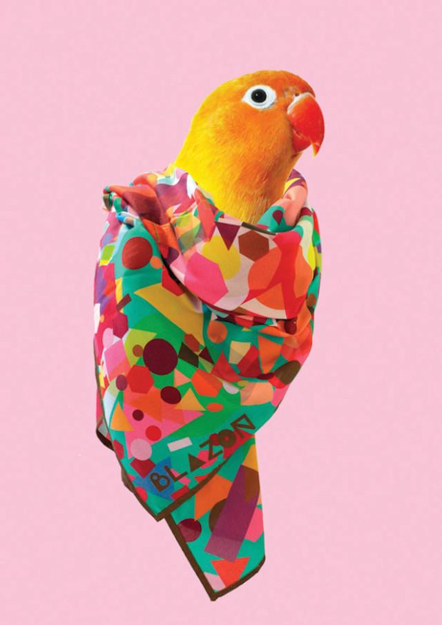 时尚Bird