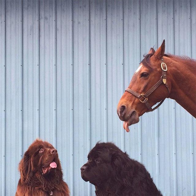 孩子和他们的宠物
