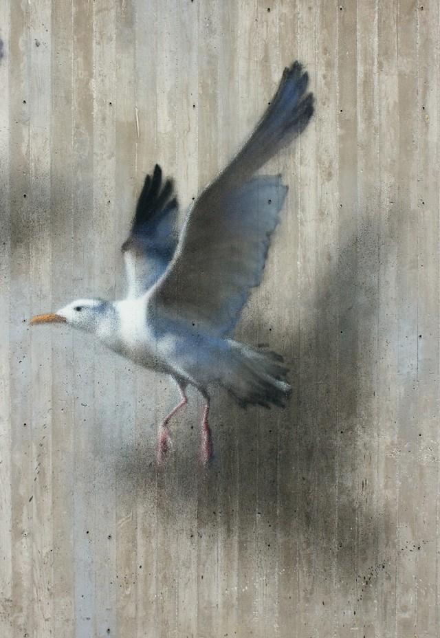 飞走的鸟儿