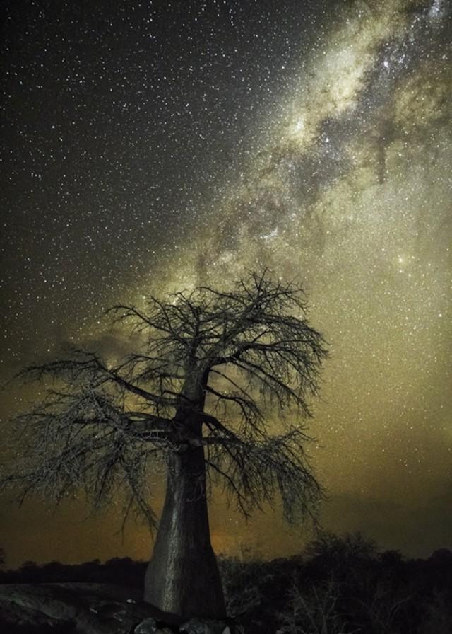 星空下的古树