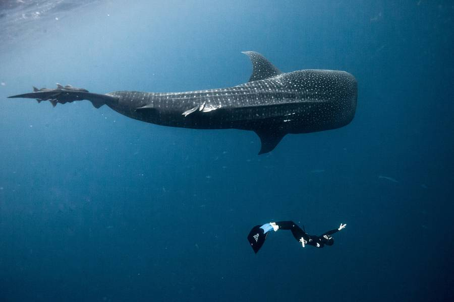 壮丽的海底世界
