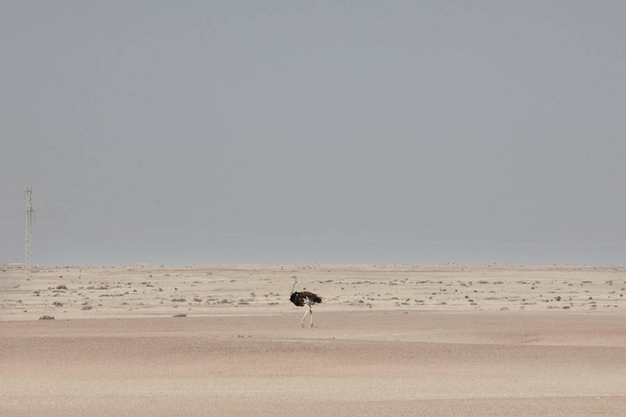 Maroesjka Lavigne