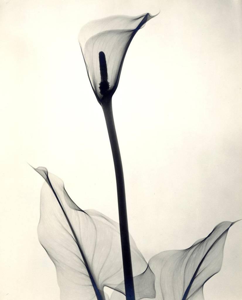 X光之下的鲜花