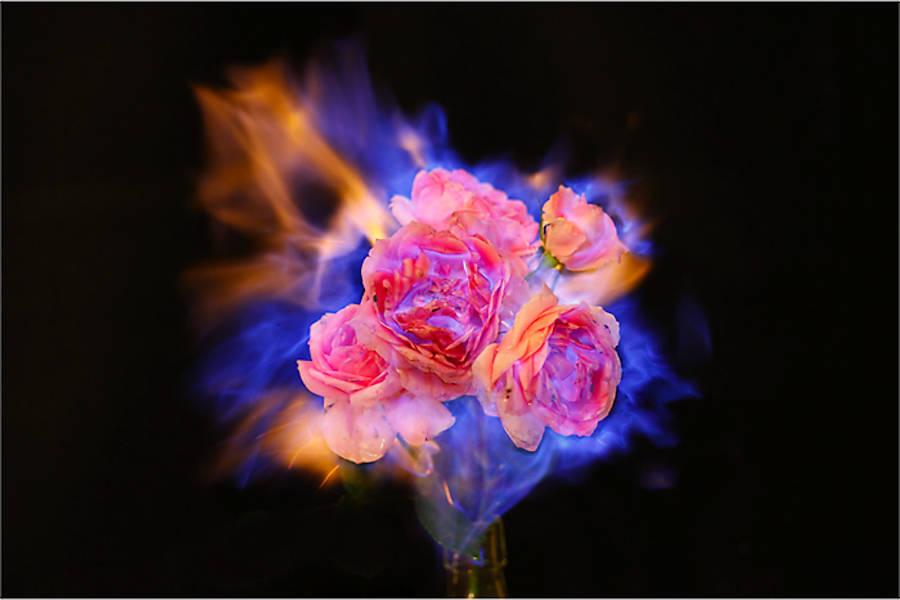 燃烧的鲜花
